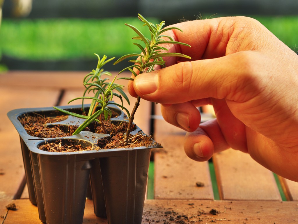 Planting Your Happiness: Gardening 101 for Your Restaurant